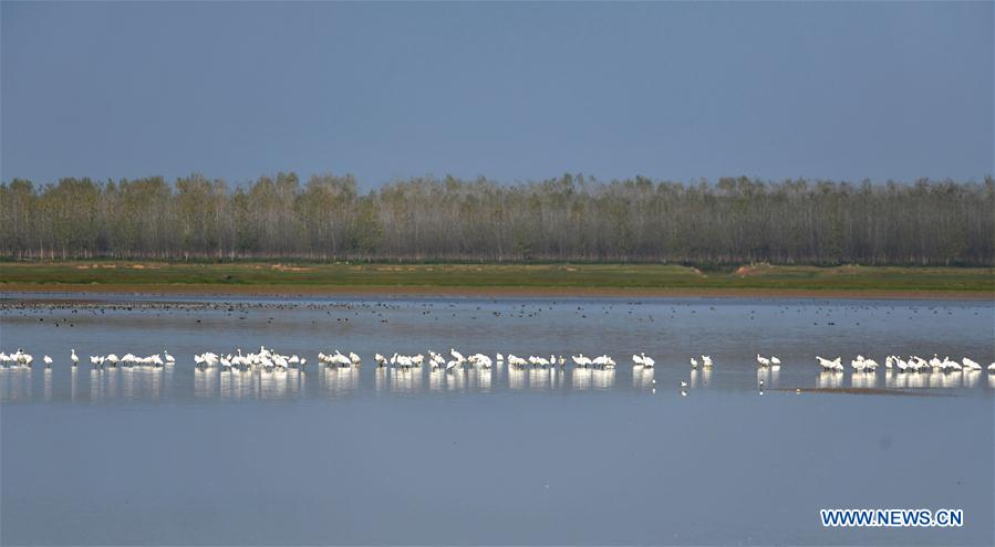In pics: migrant birds at Hengling Lake Provincial Nature Reserve in China's Hunan