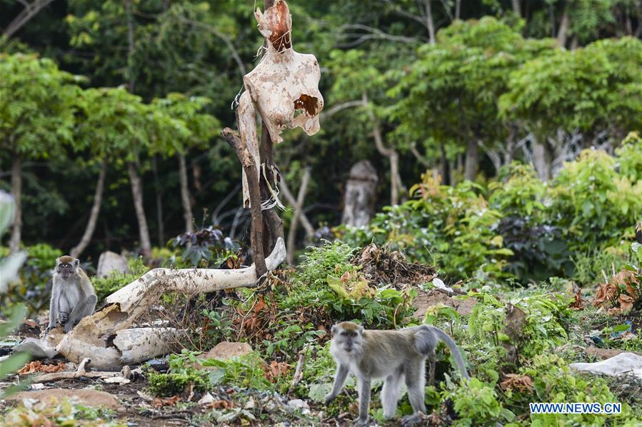 INDONESIA-ACEH-LONG TAILED MACAQUES
