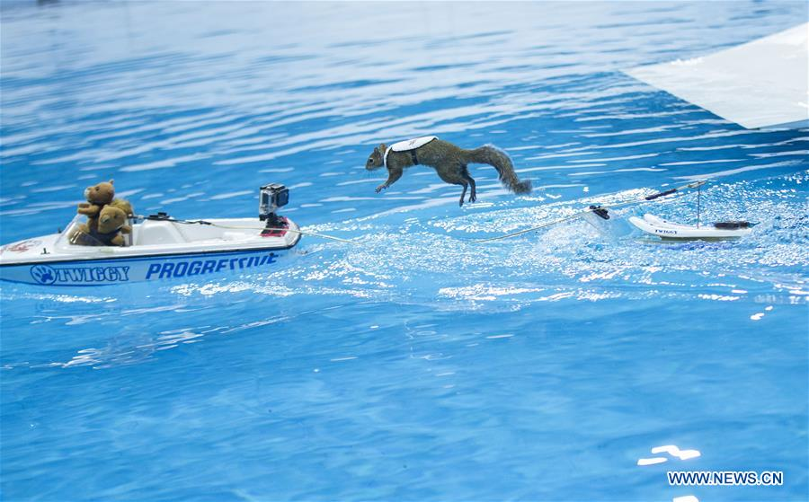 CANADA-TORONTO-WATER SKIING-SQUIRREL