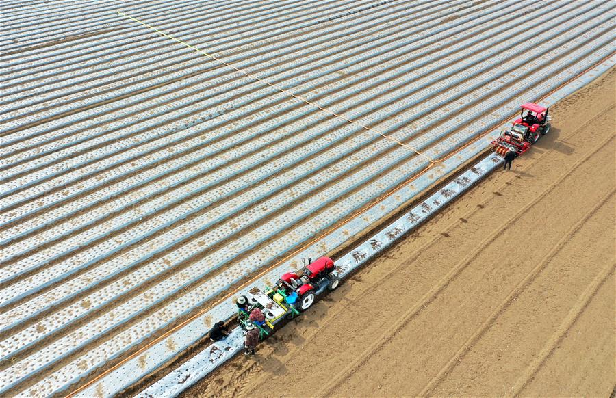 CHINA-SPRING PLOUGHING-AGRICULTURAL PRODUCTION (CN)