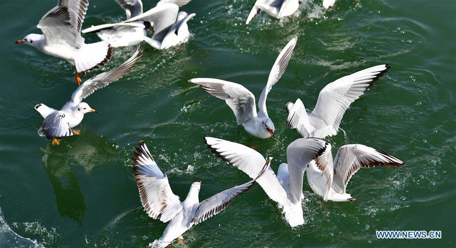 CHINA-GANSU-YONGJING-BIRDS (CN)