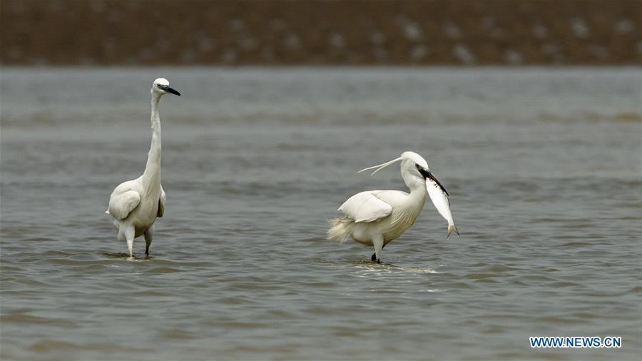 CHINA-FUJIAN-FUZHOU-BIRDS (CN)