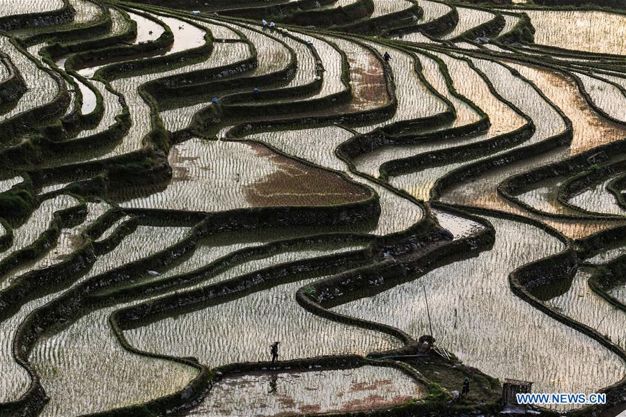 CHINA-GUIZHOU-CONGJIANG COUNTY-TERRACED FIELDS (CN)