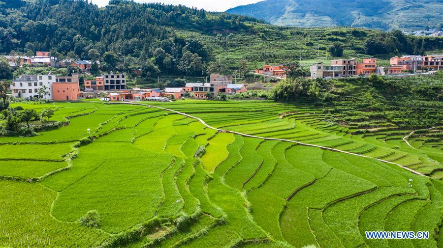 CHINA-GUIZHOU-PANZHOU-TERRACED FIELD-SCENERY(CN)