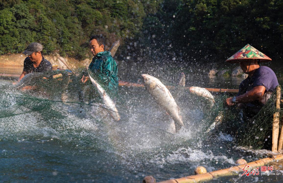 江西泰和:生态养鱼 脱贫增收