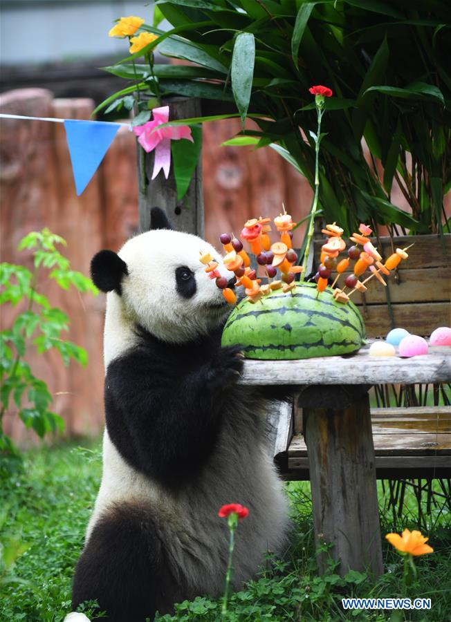 Birthday party held for giant pandas at panda hall of Siberian Tiger Park in Changchun