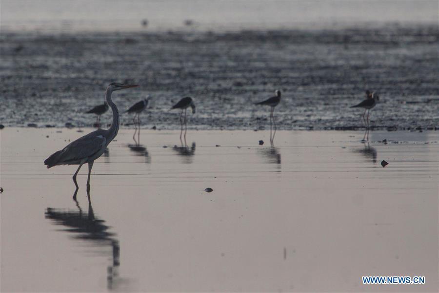 INDONESIA-JAKARTA-WATER BIRDS