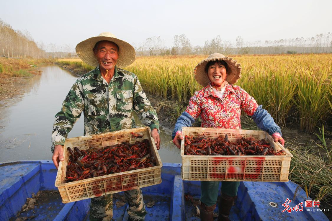 Integrated planting and breeding method adopted by Chengtou Town, E China's Jiangsu