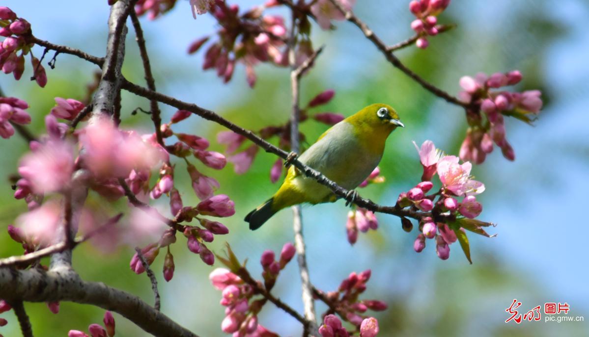 云南弥勒:鸟语花香喜意浓