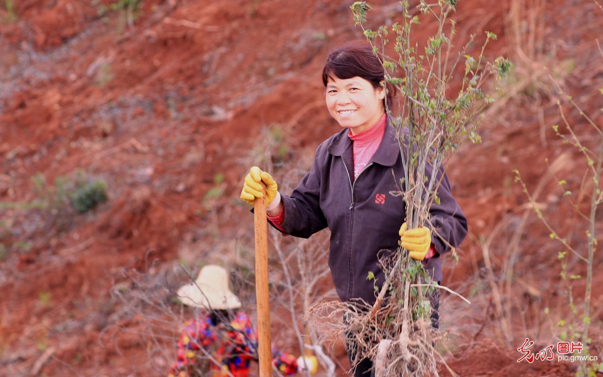 江西泰和:植树造林忙