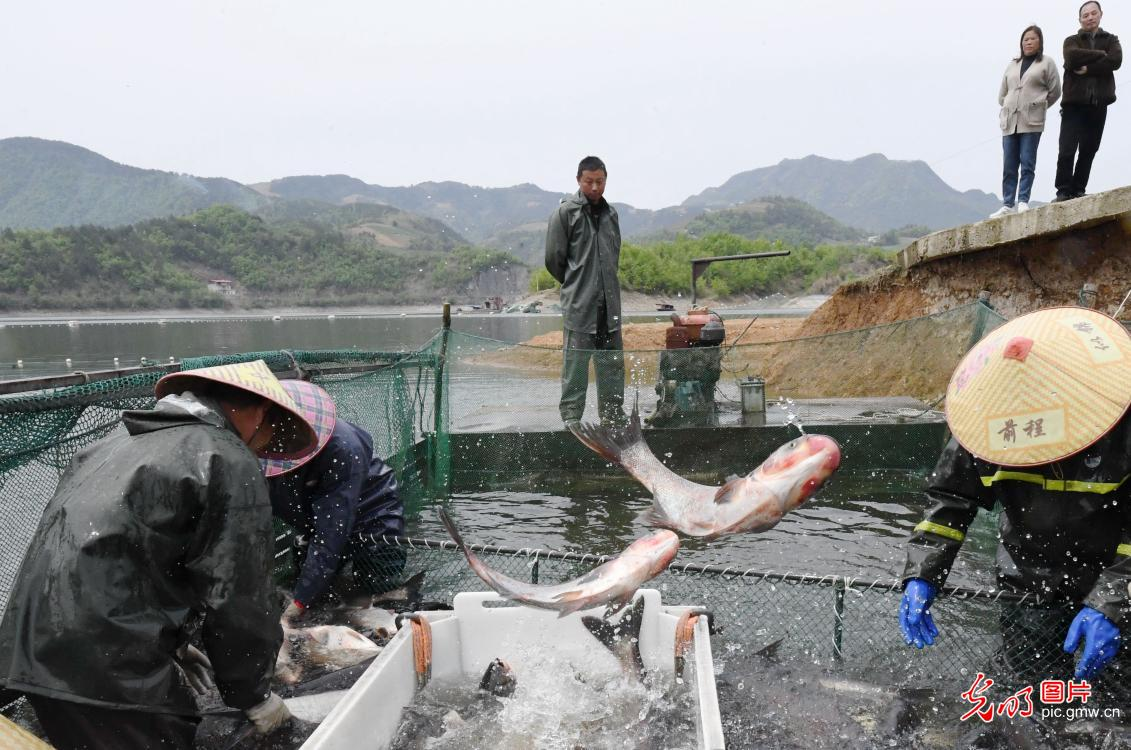 Fisherman enjoy bumper harvest from the river