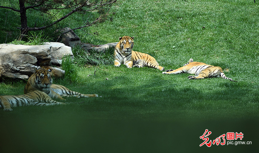 Beijing Wildlife Park - great place to interact with 10 thousand animals