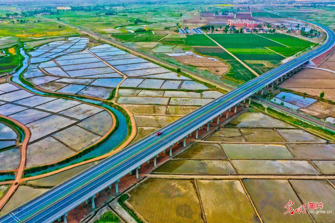 Scenery ofrice fields in NW China's Gansu Province