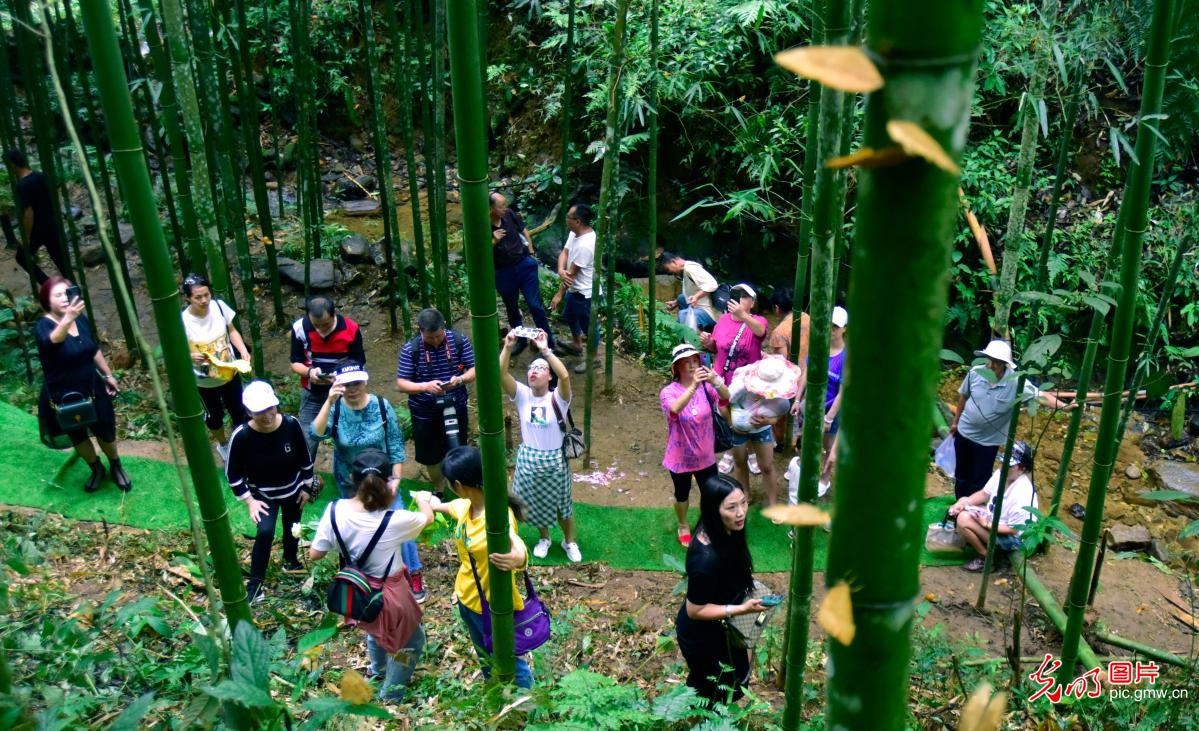 Butterfly valley in SW China's Yunnan Province promotes eco-tourism