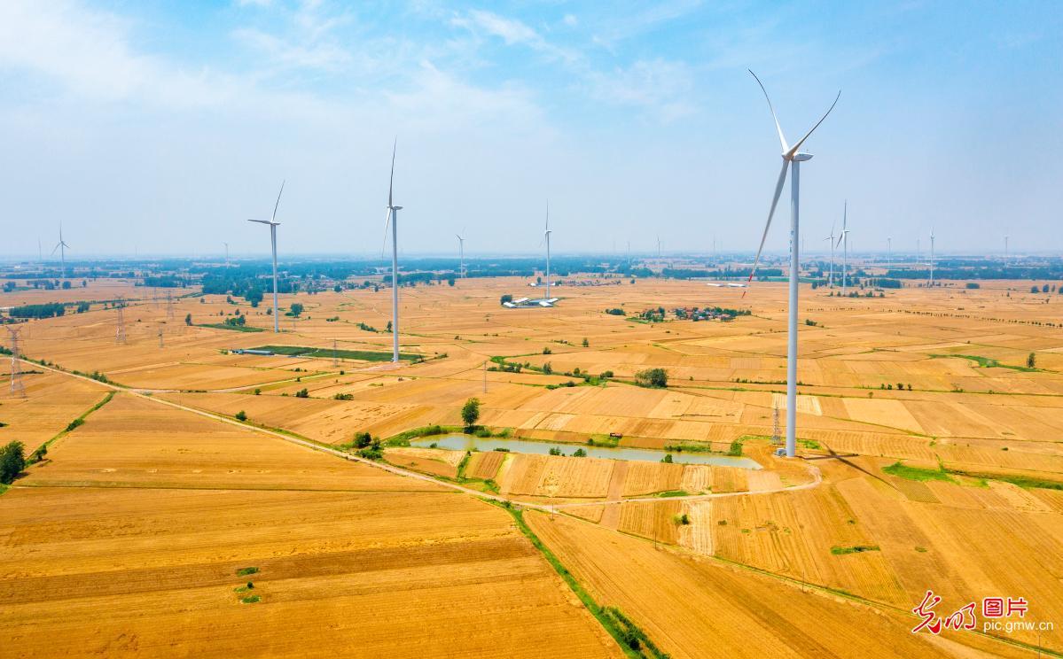 Golden wheat fields in E China's Jiangsu Province