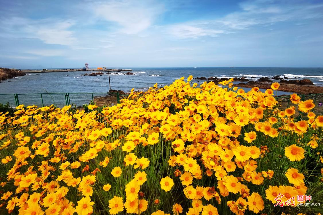 Beautiful flowers blooming along east China's coastline