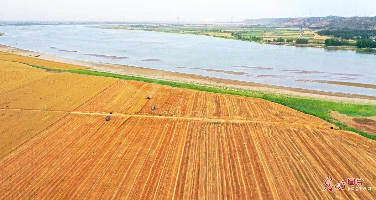 Summer grain crops harvested in C China's Henan