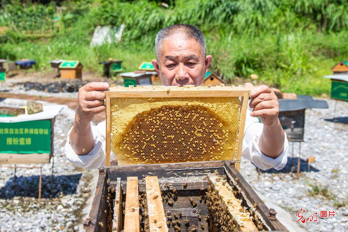 Honey industry sweetens local farmer's life