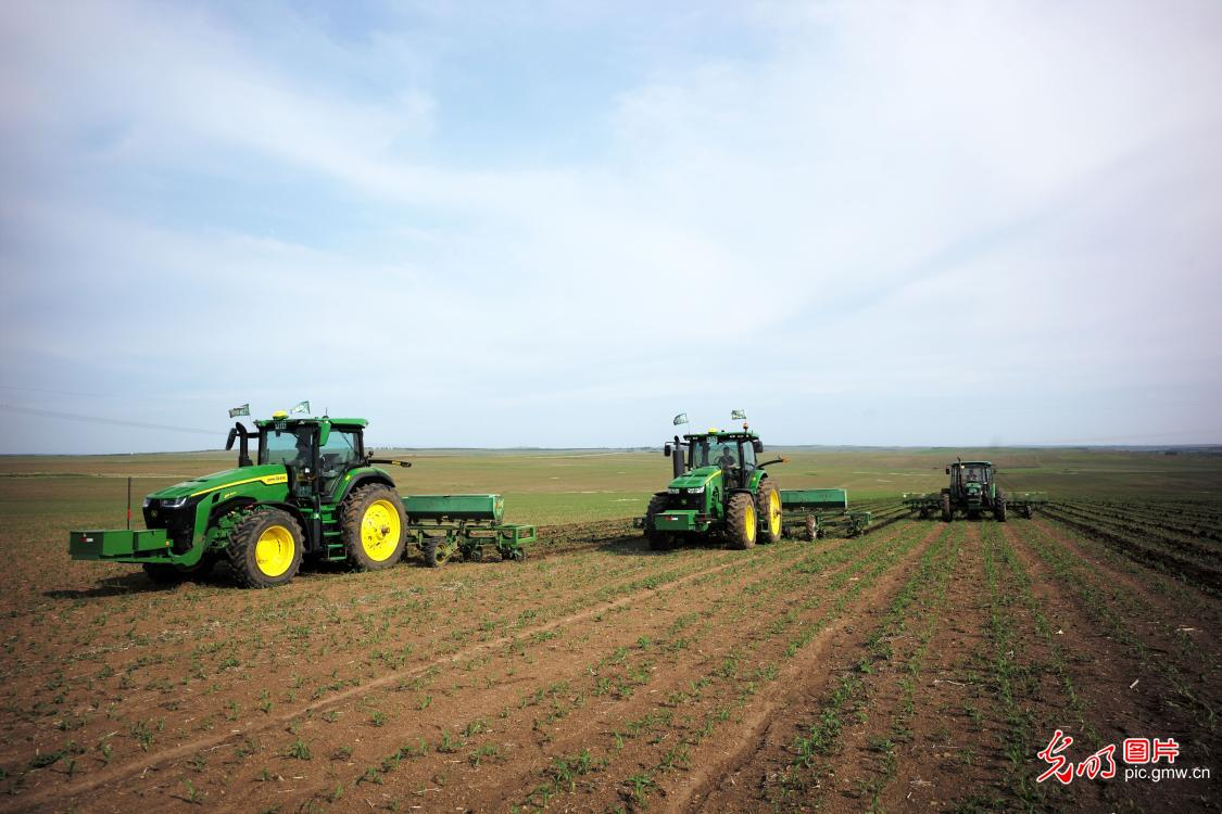 Farmers cultivating seedlings with agricultural machinery in N China's Inner Mongolia