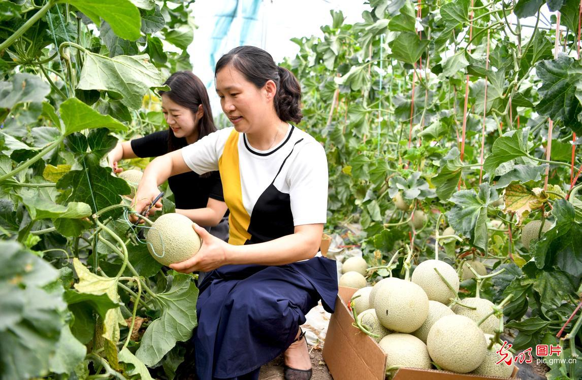 Melon industry promoted in E China's Anhui Province