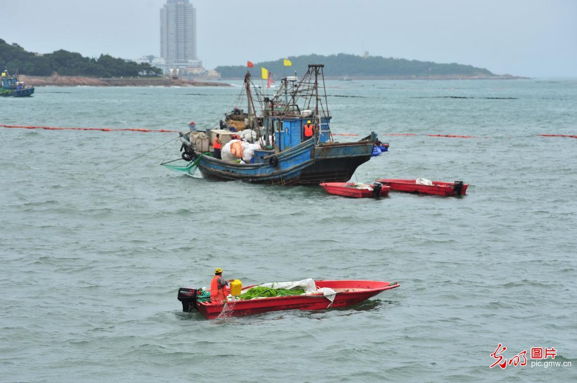 Algae invades water off E China's costal city
