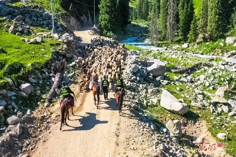 Mounted police herding sheep in NW China's Xinjiang