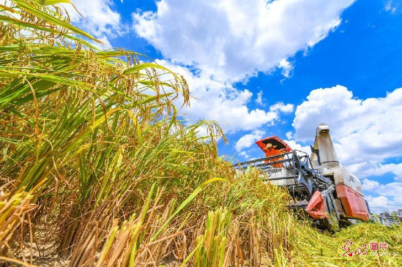 Crops usher in harvest season in E China's Jiangxi