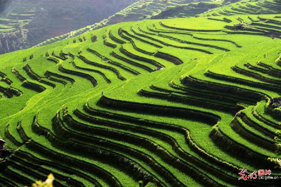 Picturesque terraced field in SW China's Guizhou