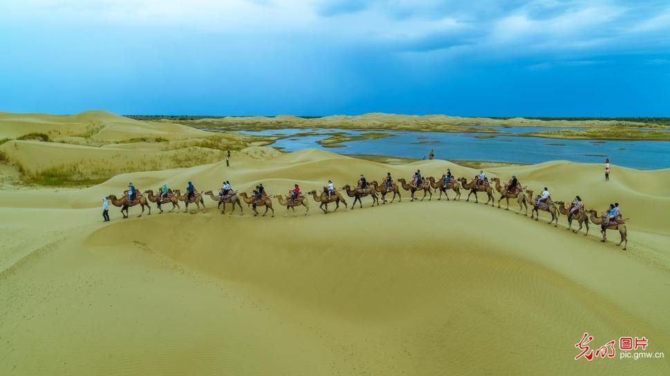 新疆尉犁:夏日沙漠旅游热