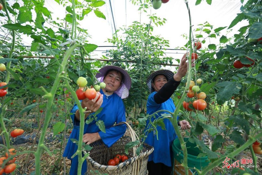 贵州荔波:坝区经济助农增收