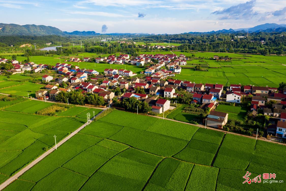 湖北远安:美丽乡村丰收在望