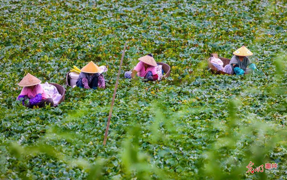 Busy farming season seen in E China's Jiangsu