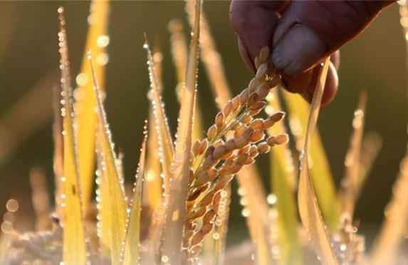 Why high grain prices?
