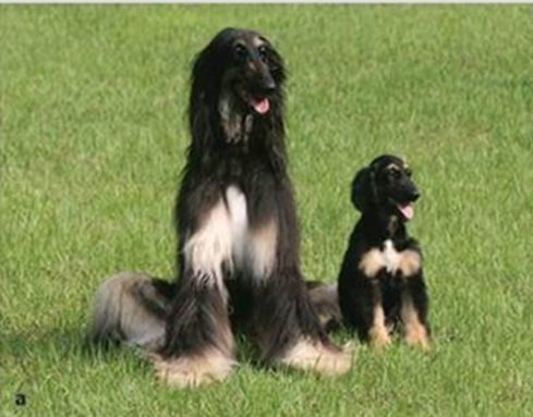 世界上第一只克隆犬背后的故事