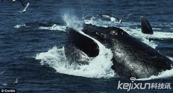 这种寒武纪时期原始节肢动物是鲸鱼的祖先物种