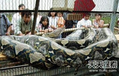 爬行类动物:世界上最大的蛇