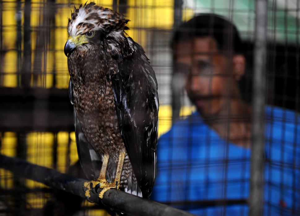 菲律宾破获野生动物走私大案