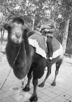 """老人在动物园骑骆驼的照片 李爱贞提供本报记者   """"这条丝巾不好看﹐"""
