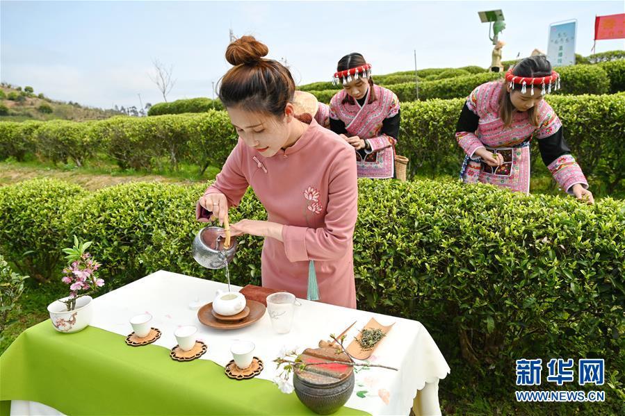 (社会)(1)福州春茶节线上开采