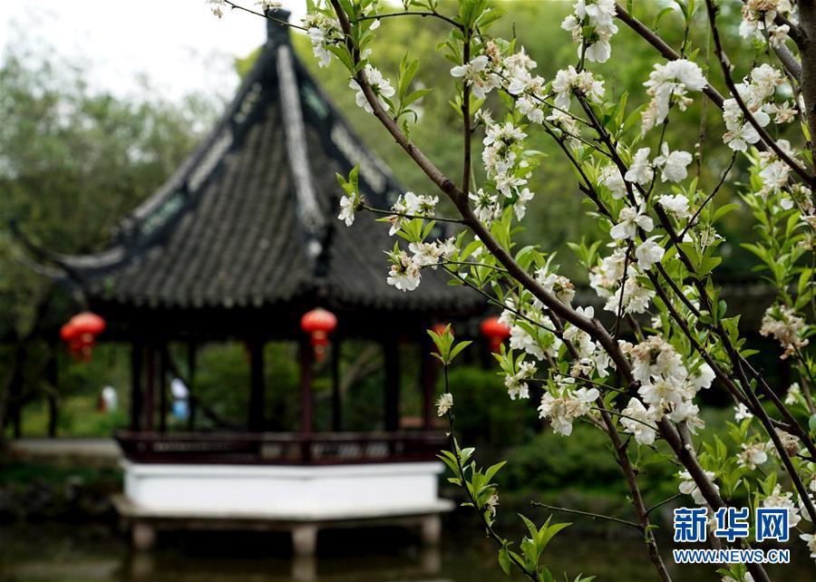(社会)(1)上海:古典园林春意浓