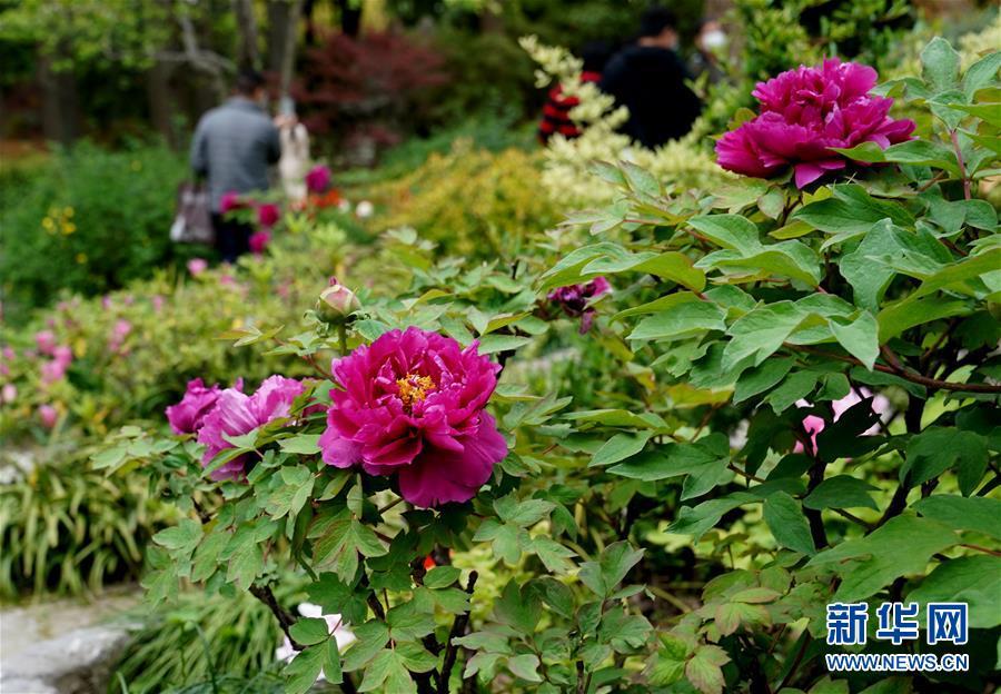 (社会)(2)上海:古典园林春意浓