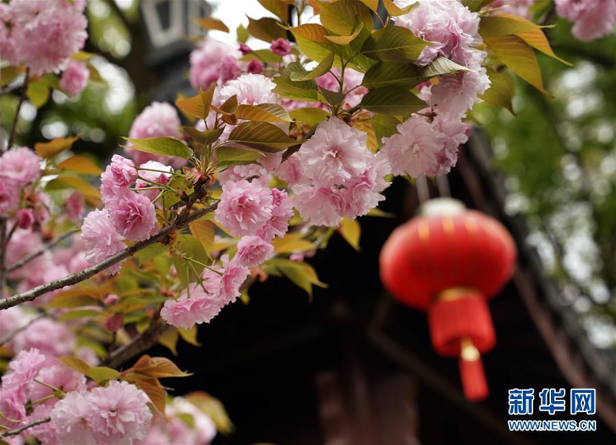 (社会)(3)上海:古典园林春意浓