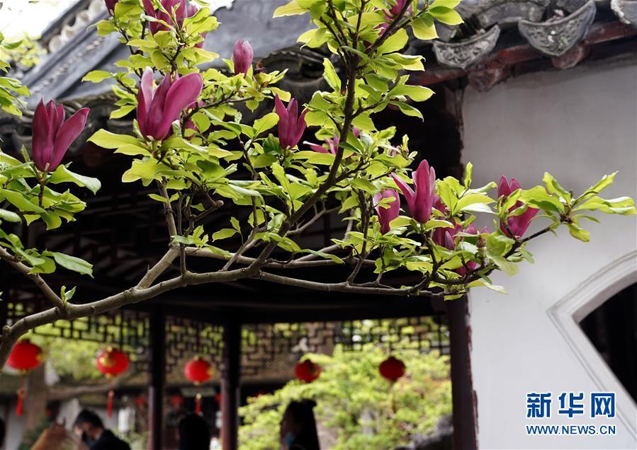 (社会)(4)上海:古典园林春意浓