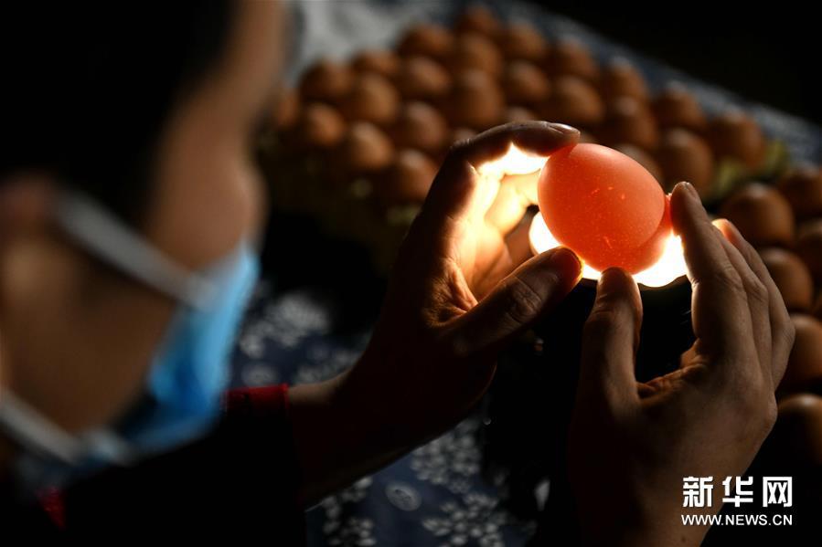 #(社会)(3)精美的蛋雕艺术