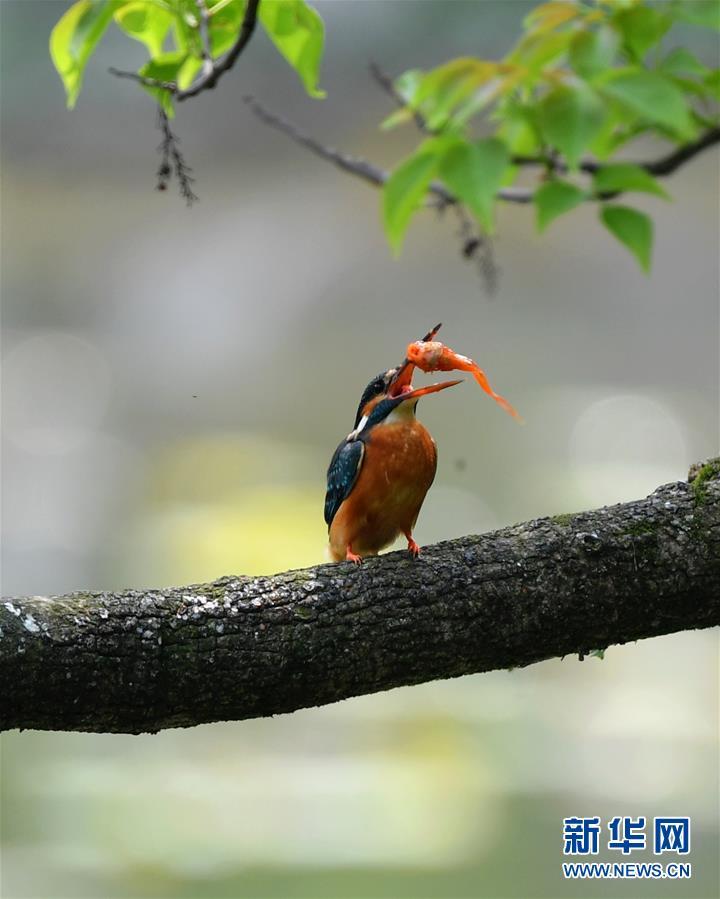 (环境)(2)春逢谷雨鸟翩跹