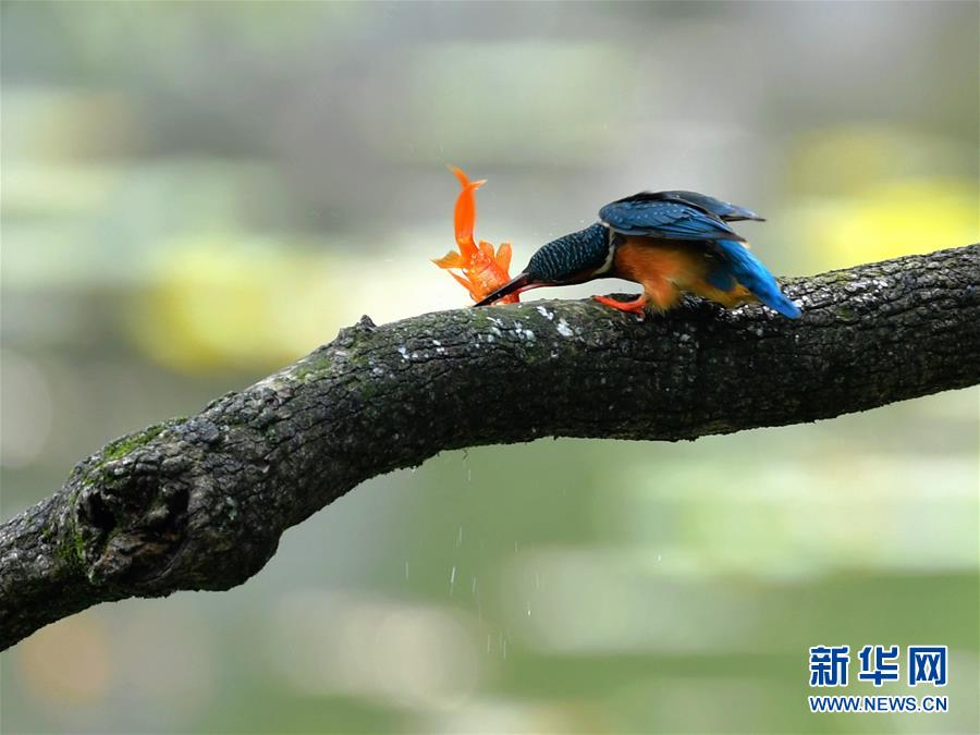 (环境)(4)春逢谷雨鸟翩跹