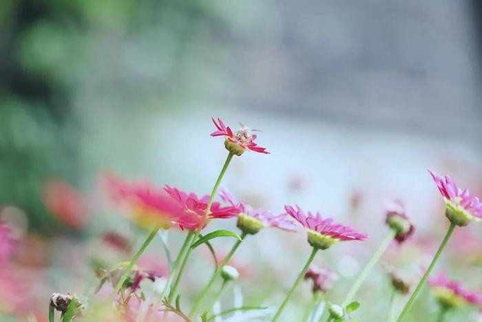 携一朵夏花 暗香浮动