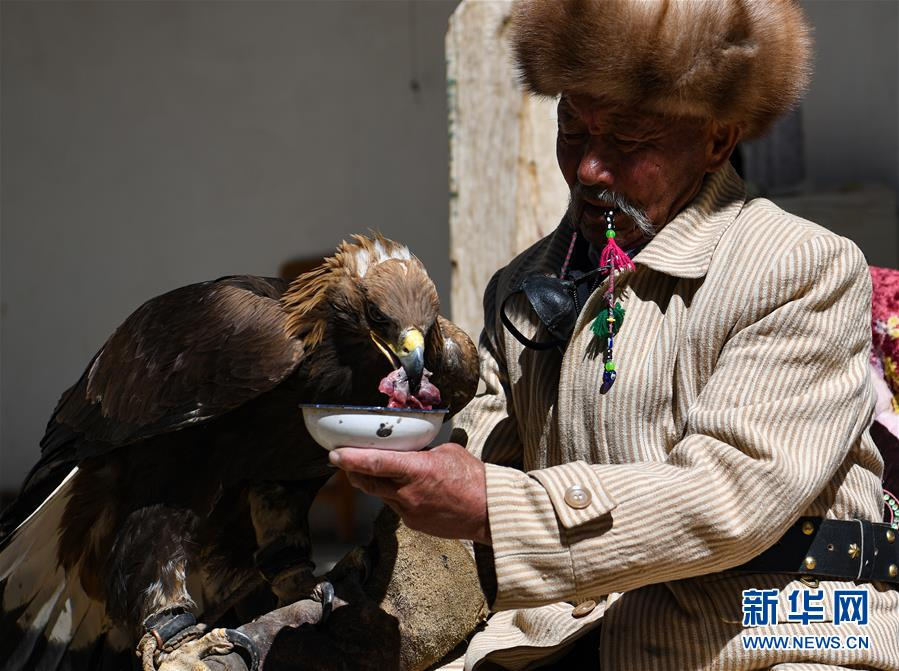 """(图片故事)(7)远山的""""鹰语者"""""""