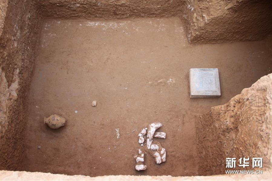 (图文互动)(4)陕西西咸新区发现隋代王韶家族墓园
