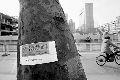 南京太平南路一地铁施工点附近的梧桐树上张贴着市民的护树宣传单(3月17日摄)。